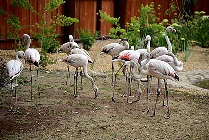 Скопската зоолошка со едно од најубавите живеалишта за фламинга во Европа