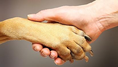 Сакајте го вашиот најдобар пријател: Денеска е Светскиот ден на кучето