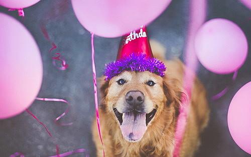 Светскиот ден на кучето