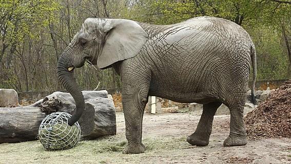 Слоница