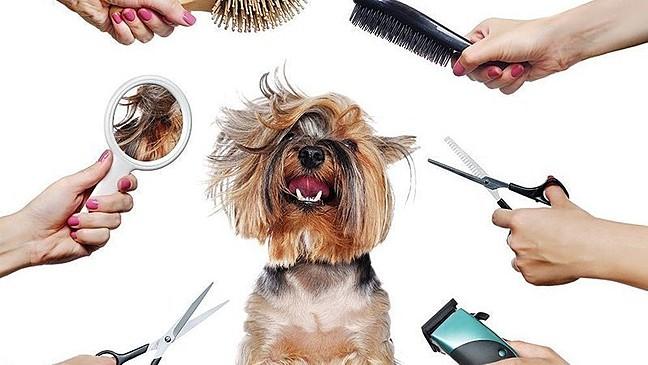 Брзи и лесни чекори како сами да го шишате вашето куче