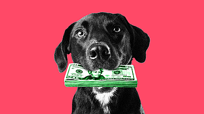 ТОП 5 најбогати миленичиња-инфлуенсери на Инстаграм