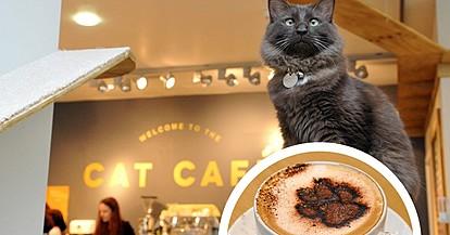 """""""Мачкотерапија"""": Во Cat Café можете да пиете кафе и да галите мачиња"""