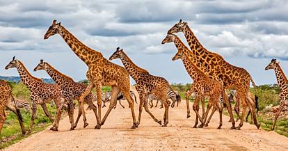 Честит светски ден на жирафата