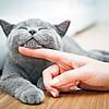 Мјау! – Денеска е национален ден на мачките: Погалете ги вашите крзнени пријатели