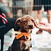 Пред и потоа: Миленици на кои им е дадена втора шанса за среќен живот