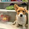 Запознајте го ова неодоливо кутре кому фрижидерот е омилено место за спиење