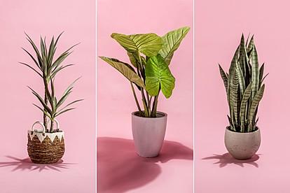 6 домашни растенија со супермоќи кои го подобруваат расположението