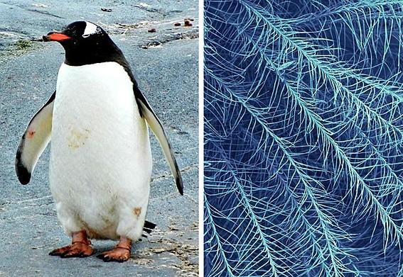 Крзното на пингвин