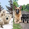 Семејни портрети во кои животните најдобро ни го доловуваат родителството