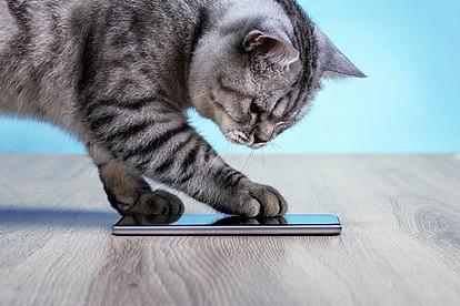 """Феноменална апликација го """"преведува"""" мјаукањето на вашата мачка во човечки зборови"""