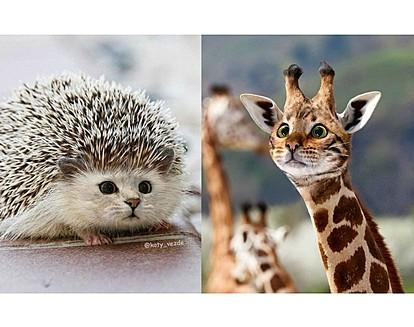 Како би изгледале другите животни со лице на мачка?