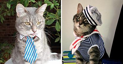 Запознајте го Гејлорд – модерен мачор чијашто гардероба е во склад со трендовите