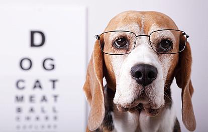 Дали се кучињата далтонисти или сепак гледаат бои